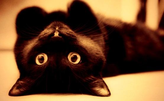 Black cats_cat training