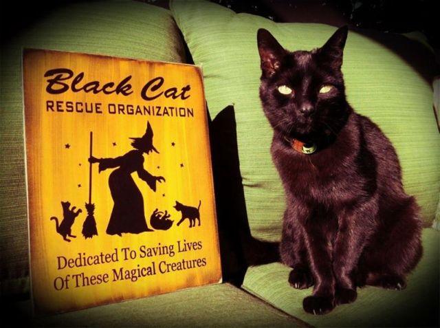 Black CAts Beaux