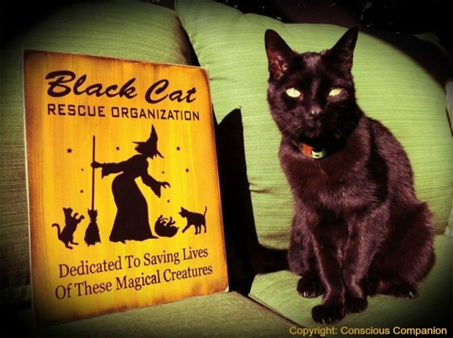 Black Cats_ Mr. Beaux_Conscious Companion