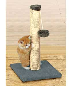 scratching post cats displacement behavior
