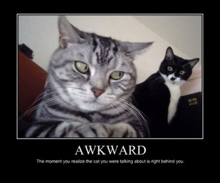 funny-awkward-cats-