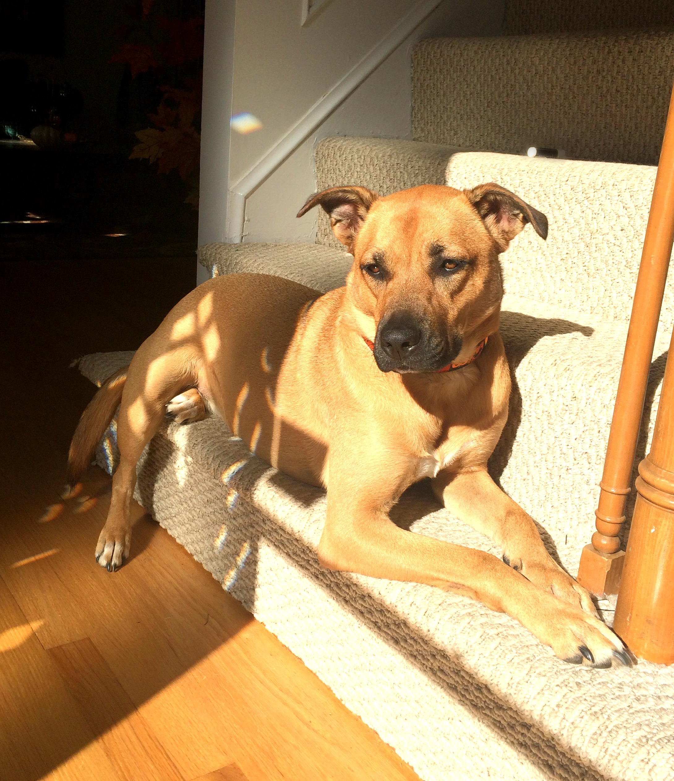 Sunshine Hocus