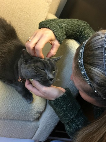 Albert_Senior Cats _conscious Companion_just cats clinic
