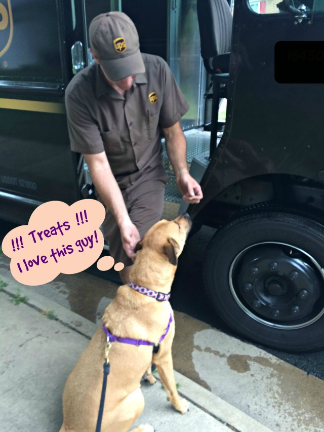 dogs and UPS_Conscious Companion_2015