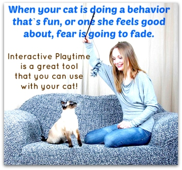 Interactive Play_Cats_Fear_anxiety
