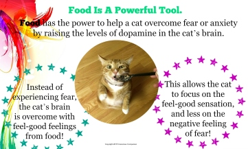 Power of Food_cat fear