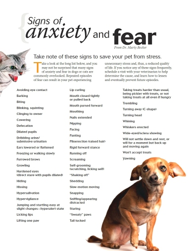 signs of anxiety and fear aggression cats dogs