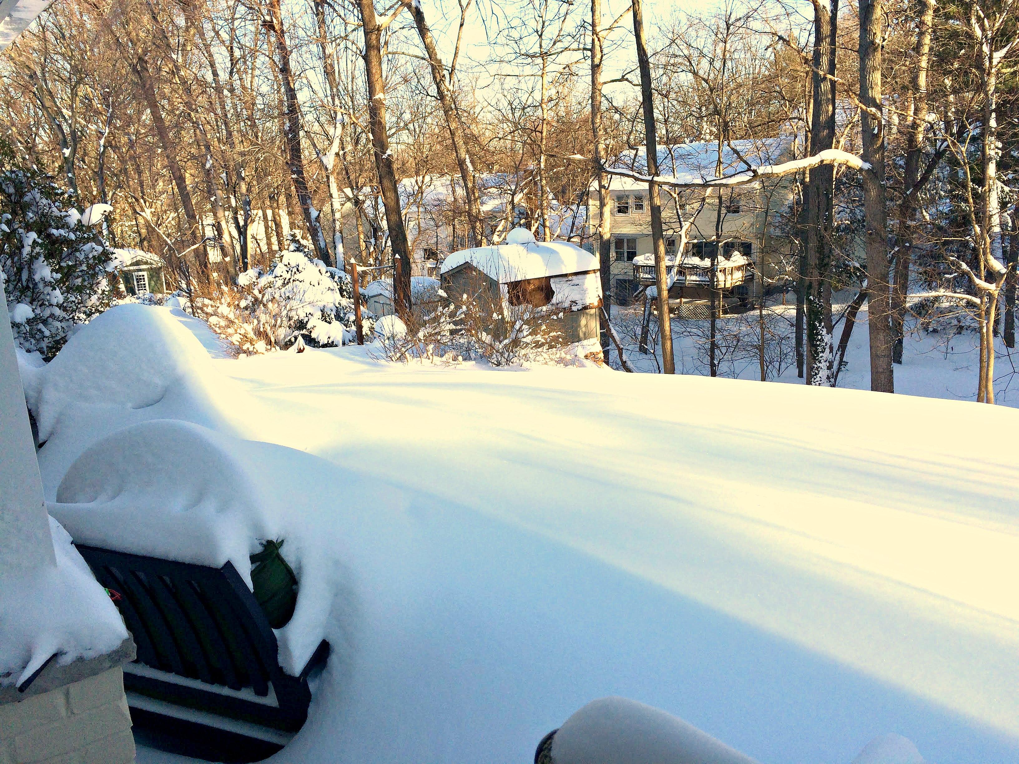 blizzard 2016 backyard vienna