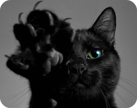 cat paw black cat