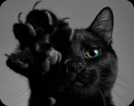 cat paw black cat