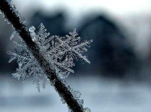 snowflake up close ice.jpg