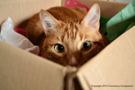 Knox In His Box
