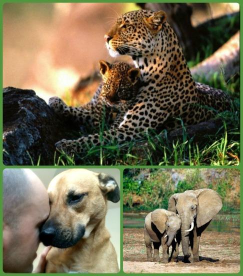 love hormone_animal emotions_conscious Companion