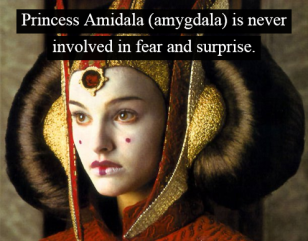 princess Amidala_fear_cats_dogs_pet brains