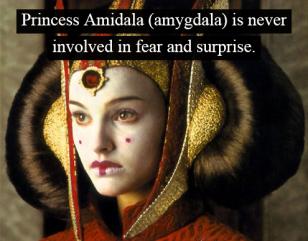 princess Amidala_fear_cats_dogs_pet brains