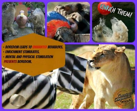 animal-enrichment_pets_diy-puzzle-toys