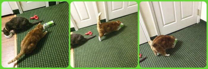 Cat DIY puzzle feeder_conscious Companion_hotel with cats