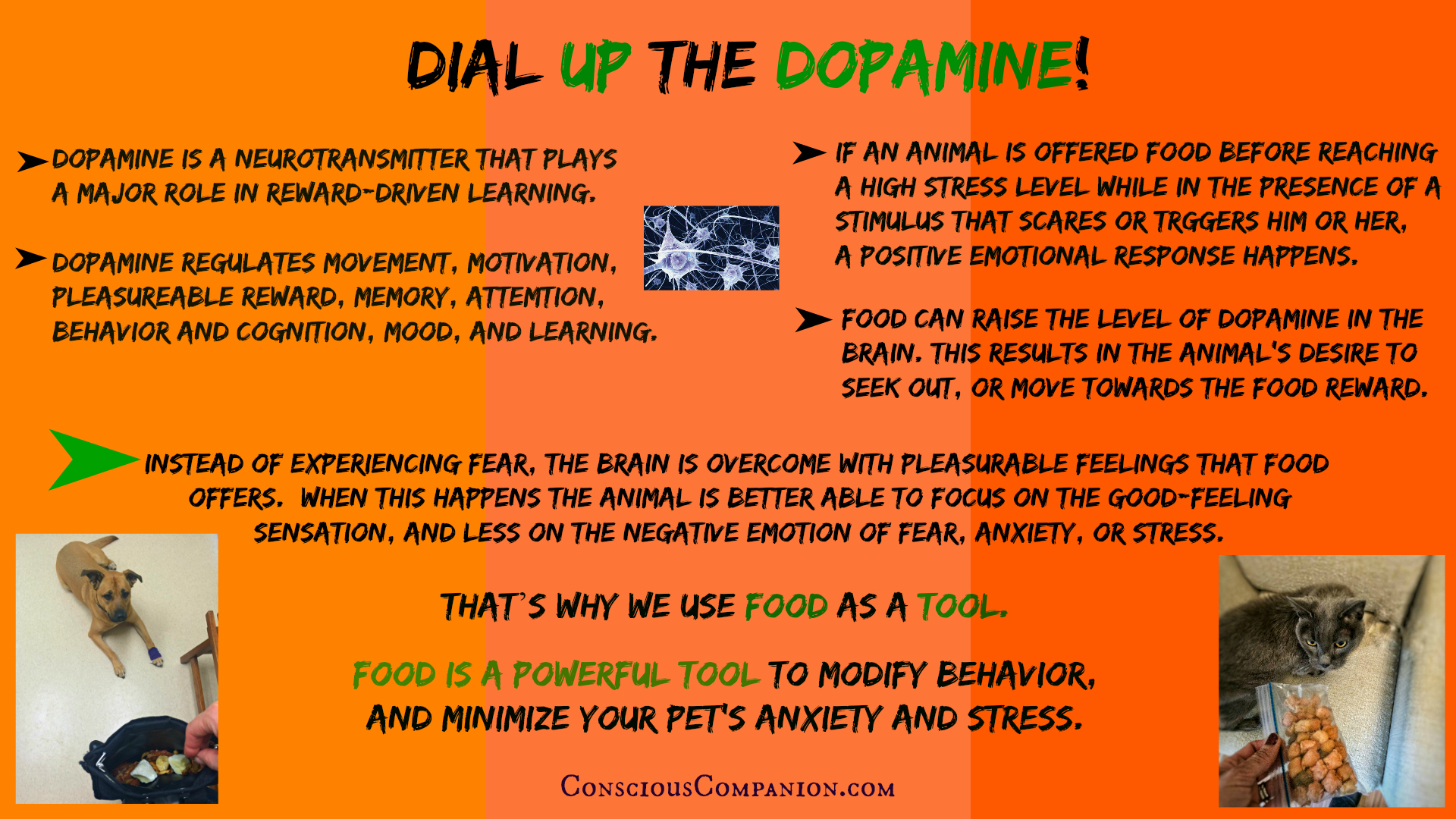 conscious companion_food in training_dopamine