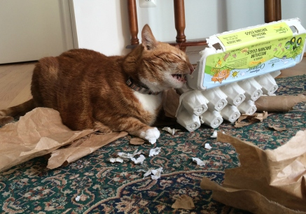 DIY puzzle feeder for cats.jpg