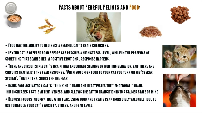 Food and Fear_cats