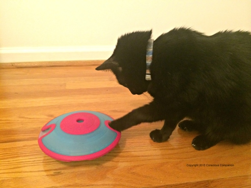 Interactive Puzzle Feeder for Cats