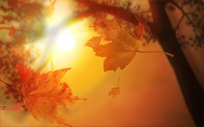 3D-Autumn-1680x1050