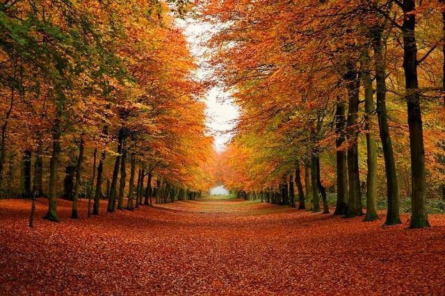 autumn-forest