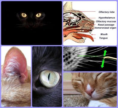 cat senses.jpg