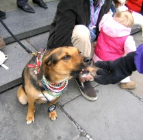 File` (Feelay) enjoyed the last of her days getting to see parades and get biscuits from people.