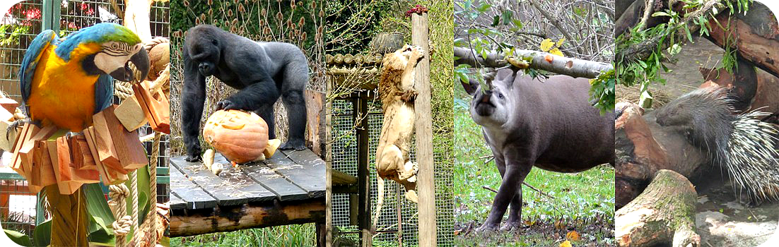 animal enrichment_zoos