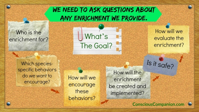 Creating enrichment program for CATS_What's the Goal_Questions to ask_Conscious Companion