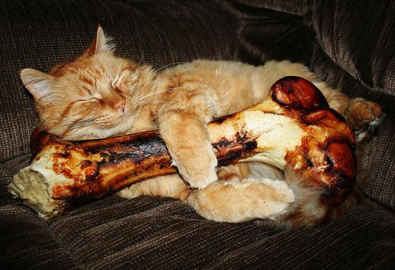 Cats are predators_cat toys_cat chews