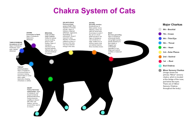 Chakra-System-of-Cats