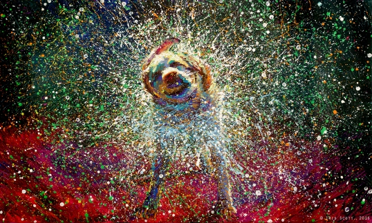 Dog Shake Art_Energy_year of the dog_earth dog