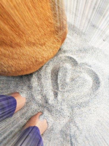 Healing_empath_tips_pets_grounding_Conscious Companion_Amy Martin