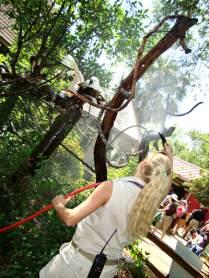 captive-moluccan-cockatoos-enjoying-enrichment-rain-shower-mimicing-wild-habitat