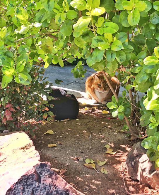 cat behavior_Beaux and knox_ senior cat_copyright conscious companion.jpg