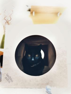 Conscious Companion_cats_hiding_dezi and roo tunnel _cat tunnel_why does my cat_why cats love boxes_house panther_coyright Amy martin