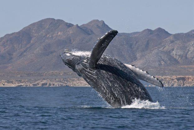 Felipe Calderon announced the cancelation of a Touristic project in Cabo Pulmo