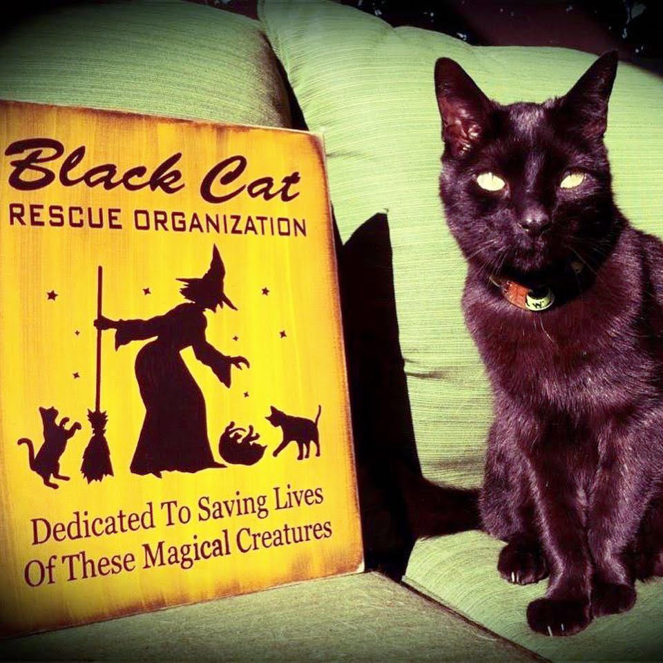Black Cat Day_world black cat day_black cats_feline facts_conscious companion_empath (2)