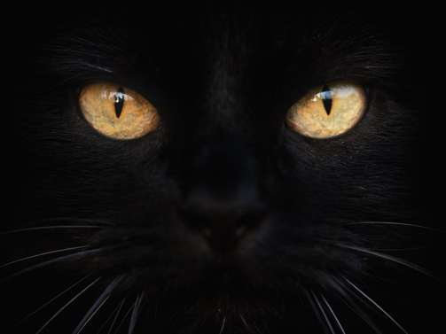 pictures-of-cat-eyes_black cat day
