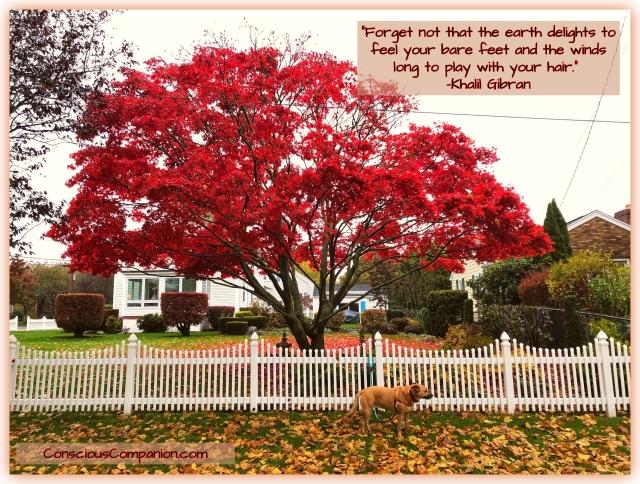 Autumn Colors_fall Leaves_Khalil Quotes_Conscious Companion_dog life.jpg