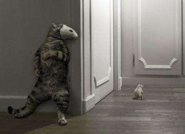 Sneaky-Cat-763.jpg